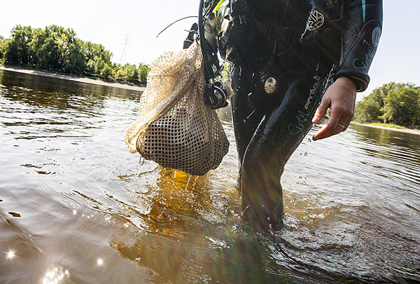 National Park Service biologist Allie Holdhusen left the water with a bag of mussels she collected for observation in the Mississippi River near Pike Island. - Courtney Perry for MPR News