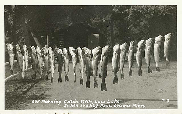 """Postcard showing """"Our morning's catch at Mille Lacs Lake,"""" circa 1925. - Photo courtesy Minnesota Historical Society"""