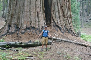 Bryce Gaudian stands in front of a giant sequoia at Sequia National Park in California. He raised over $70,000 for traumatized children with his hike. — Provided