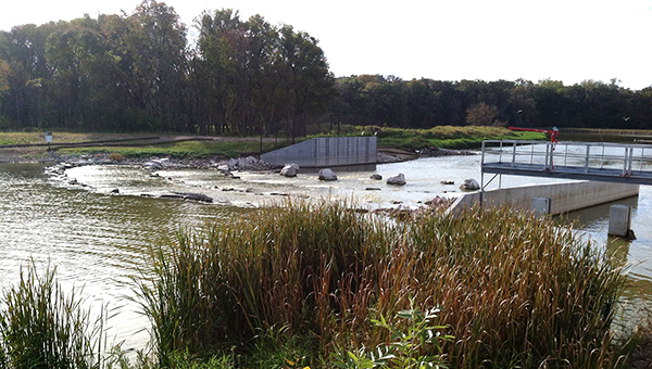 Wildlife can be seen in the area of the Jugland Bridge where the Shellrock River flows out of Albert Lea Lake. — Dick Herfindahl/Albert Lea Tribune