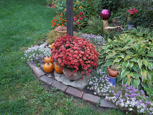 A pumpkin added to the garden adds a special touch to the fall gardens. - Carol Hegel Lang/Albert Lea Tribune